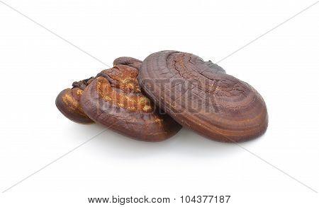 Lingzhi Mushroom Ganoderma Lucidum Isolated on white background