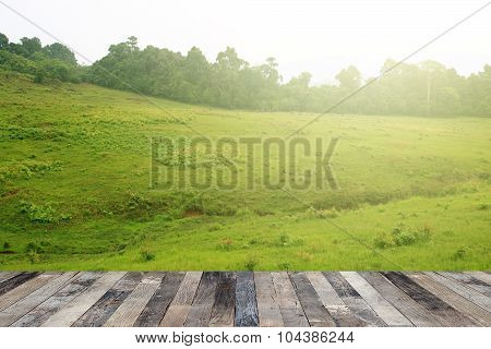 Tropical Forest Above A Wooden Floor