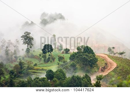 Above the clouds. View of the of clouds and mist around the trees. Nagarkot village (Nepal).