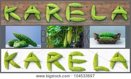 Karela bitter melon caraili composition with text illustration