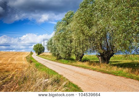 country path with willows