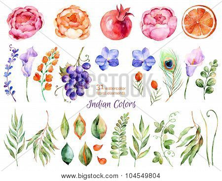 Colorful floral collection with roses, flowers, leaves, pomegranate, grape, callas, orange, peacock