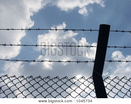 Wire Fence 3