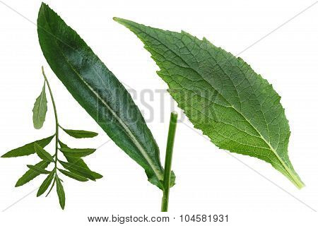 Set Of Leaf