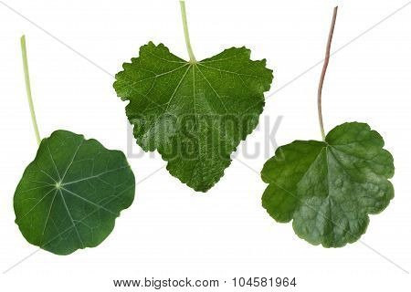 Leaf Colleage