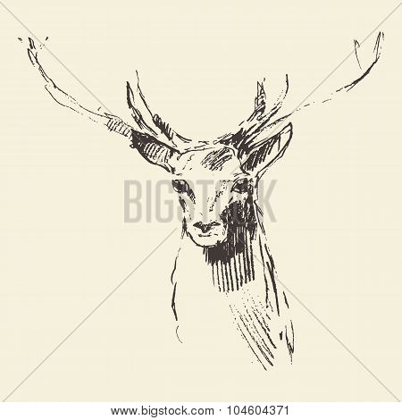 Deer engraving illustration hand drawn sketch