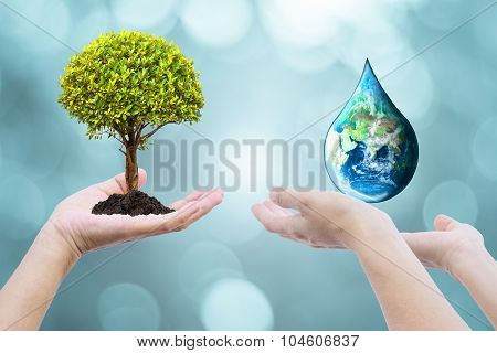 Two Human Hands With Tree Planting And Green Globe With  On Blurred Natural  Background Of Tree Leav