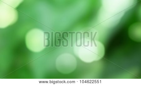 abstract green background with natural bokeh. Header for website