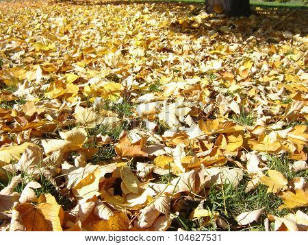 Stack Of Dry Leaves On The Ground
