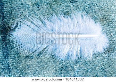 Close-up View Of  Feather