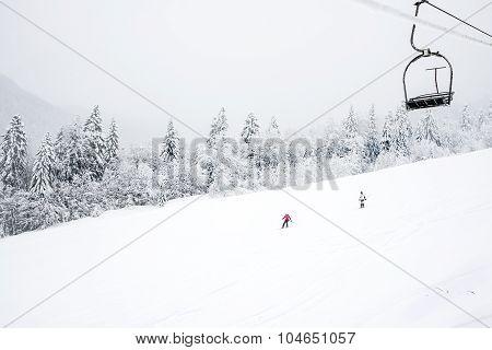 KOLASIN, MONTENEGRO - FEBRUARY 1: Ski slopes among coniferous forest in 'Kolasin 1450' mountain ski