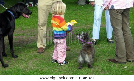 Winner Of The Third Place Rosette In A Dog Show