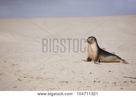 Sea lion resting on a beach