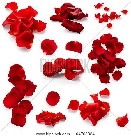 Set Of Rose Petals