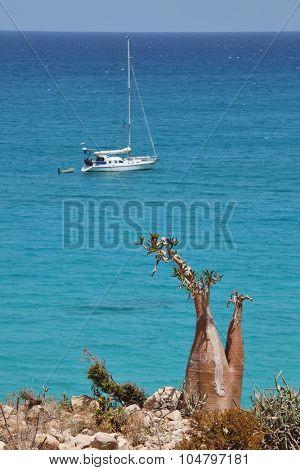 Bottle tree and yacht, Socotra island, Yemen