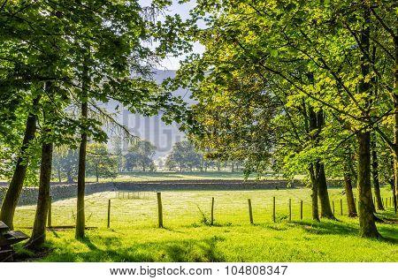 Backlit rural English scene
