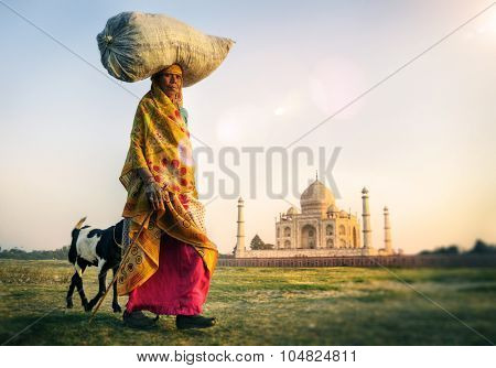 Indian Woman Carrying on Head Goat Taj Mahal Concept