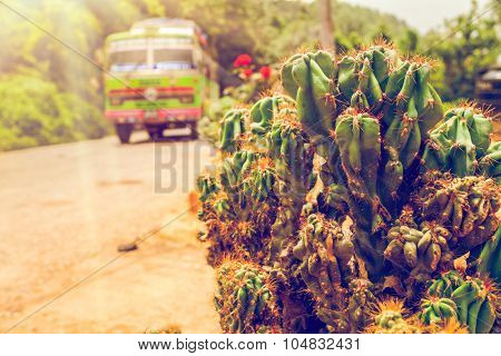 colorful bus on asphalt road and green cactus closeup in Nepal, Annapurna trekking poster