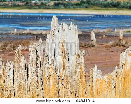 Old Wooden Boards In A Dry Natural Estuary In The Evening Light Of The Setting Sun. The Water Has Re