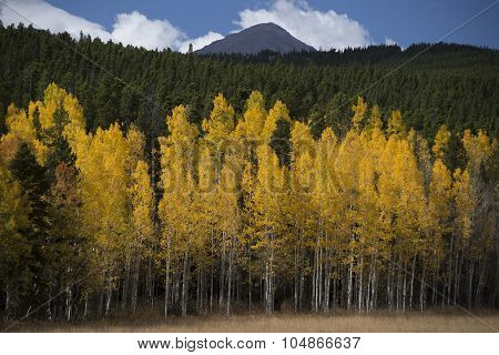 Colored forest