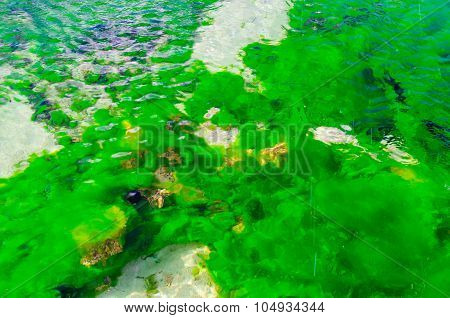 Close up oil algae and lichen in polluted water. Top view shot.