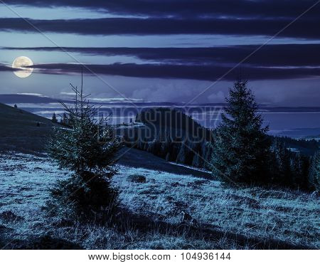 Conifer Forest  In Mountains At Night