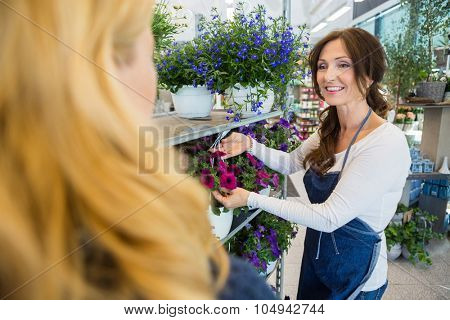 Smiling florist showing fresh flower plant to female customer in shop