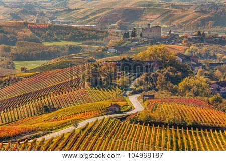 Narrow road through colorful autumnal vineyards in Piedmont, Northern Italy.