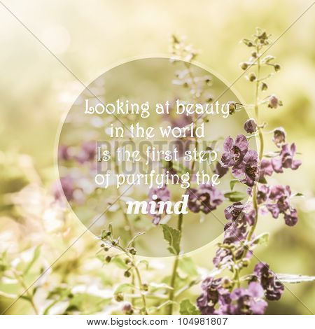 Meaningful Quotes On Purple Flowers In Meadow Under Sunlight