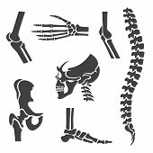 Human joints vector set. Orthopedic and spine symbols. Elbow and knee, wrist and rehabilitation, hand and backbone illustration poster