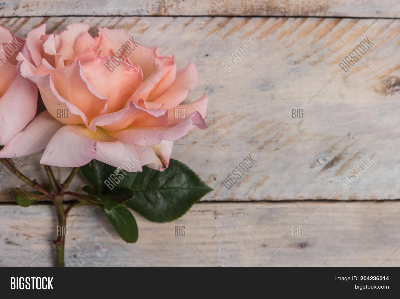 Fresh Bunch Pink Roses Image Photo Free Trial Bigstock