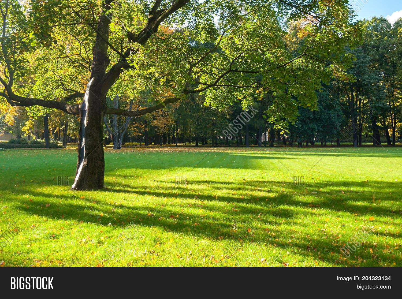 Fall Background - Colorful Fall Image & Photo | Bigstock