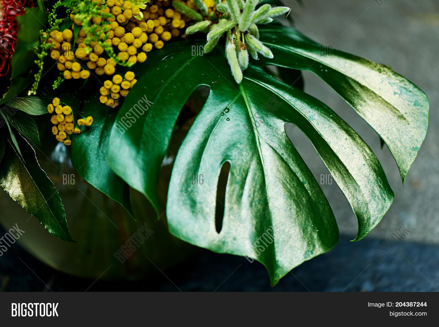 Leaf Monstera Painted Image Photo Free Trial Bigstock