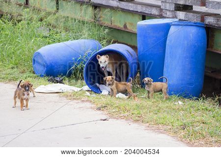 Stray dog in a blue tank of mother dog with puppy.