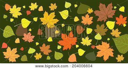 Pattern of autumn leaves on a green background