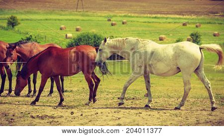 Horses herd on meadow field during summer or spring time. Idyllic countryside landscapes with animals concept.