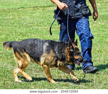 Police man with his sniff dog in action
