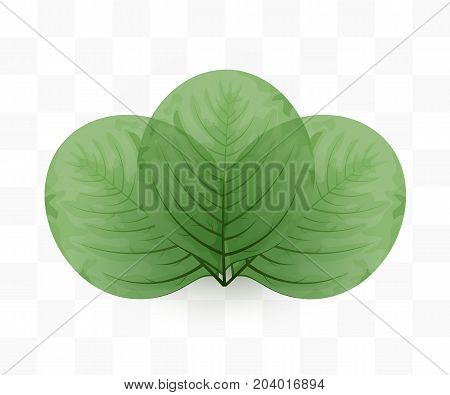 Leaves on transparent background. Green eco concept. Vector illustration