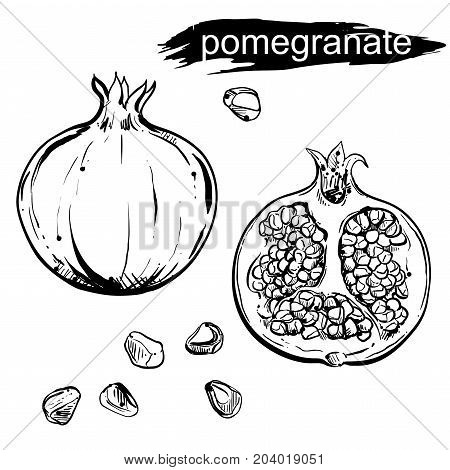 hand drawn illustration set of pomegranate, grain on white background. Engraved pomegranate. sketch. vector eps 8