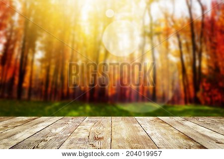 Beautiful sunlight in the autumn forest. Beauty nature background