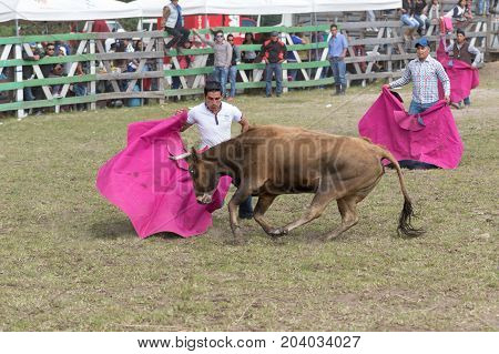 May 28 2017 Sangolqui Ecuador: man holding up a cape charged by a bull at a rural amateur bullfight in the Andes