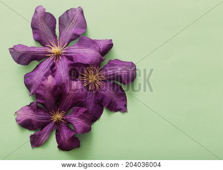 the green background with the purple clematis