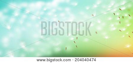 Seeds. Fluffy dandelion flower against the background of the summer landscape.
