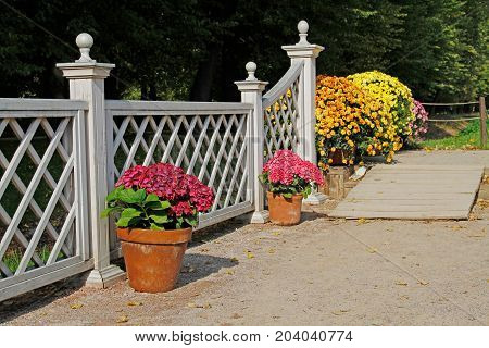 Wooden ramp pink hydrangeas and colorful chrysanthemums in the pots at the white fence in the park