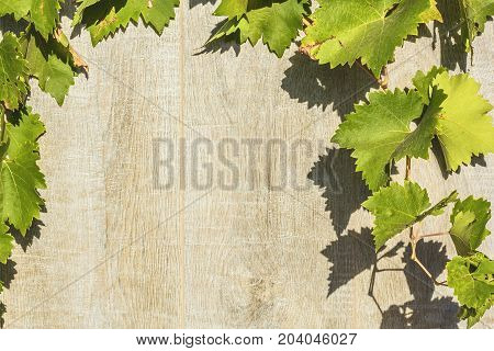 Texture whitewashed gray wooden planks and grape leaves. Background close up