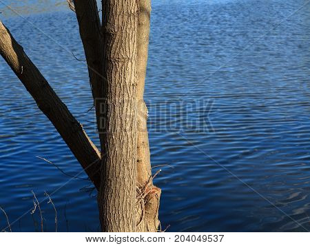 Lakeside Tree and Blue Water - Branches and pond with copy space