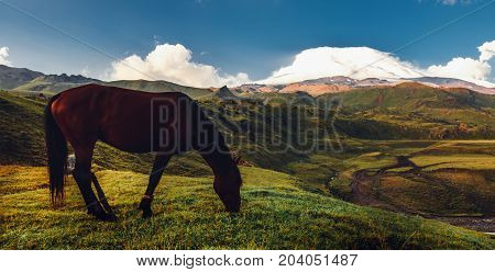 Brown Horse Grazing In Mountain Field Valley On Background Of Mount Elbrus. Rural Countryside Concept