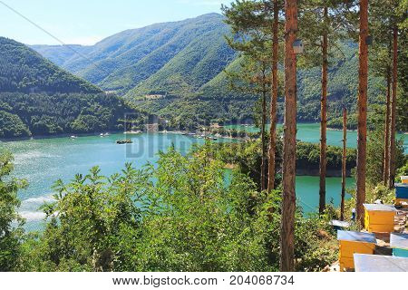 Pine trees, beehives at Vacha dam in Rhodopes mountains, Bulgaria