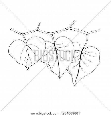 leaf line icon vector illustration on white