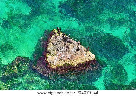 Cormorants on a Rock in the Black Sea
